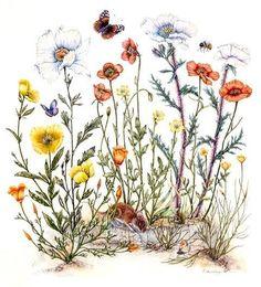 poppy botanical flower tattoos | California Poppy Illustration