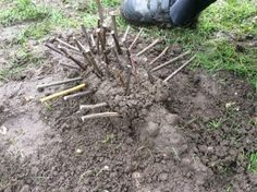 Mud sculpture hedgehog