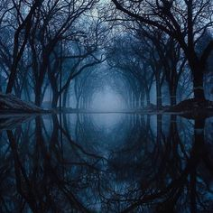 Mirror. Winnipeg, Manitoba @yoshigrams #world #natural #naturalbeauty #forest #zenlifeterritory