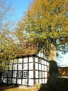 Alter Baum an einem Fachwerkhaus in Lipperreihe bei Bielefeld am Teutoburger Wald in Ostwestfalen-Lippe