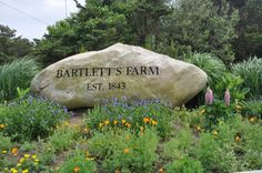 Nantucket's oldest working farm, Bartlett's.