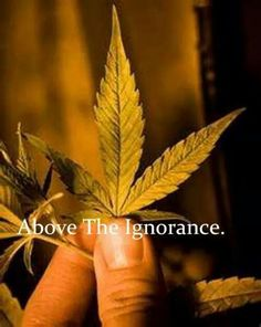 Live above the ignorance.....
