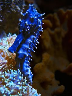 sea horses   Recent Photos The Commons Getty Collection Galleries World Map App ...