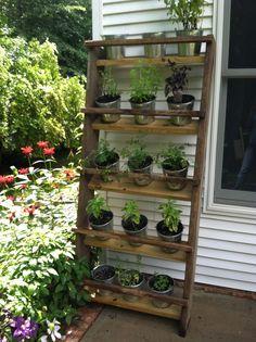 17 Most Popular Balcony Garden Shelves You Can Build Balcony Herb Gardens, Vertical Herb Gardens, Small Herb Gardens, Wall Gardens, Terrace Garden, Indoor Vegetable Gardening, Herb Gardening, Herbs Garden, Garden Shelves