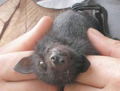 Answer: pretty much. | Community Post: This Is Why We Should All Love Bats