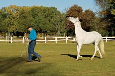 Is your horse super-lazy on the lead line? Here's how to get energy into his feet.