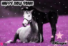 Happy New Year Horses