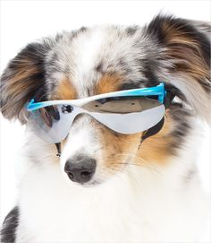 0a7560791d72 15 Best Doggles and More images