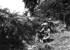 Infantry 35th  division. Battle of  st. Lo | signature element of the terrain in Normandy, a hedgerow like so ...