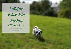 In diesem Artikel zeige ich dir auf, welche Fehler du beim Rückruf deines Hundes machen kannst und wie du diese vermeidest.