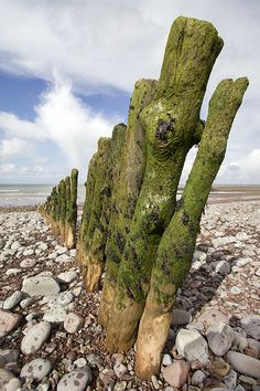 Groynes, Porlock Weir by HartwellPhotography, via Flickr