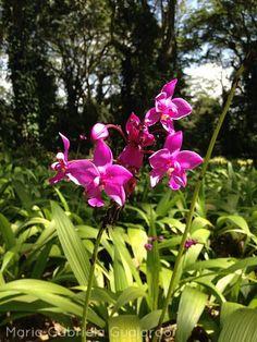 Parque de la Exotica Flora Tropical Flora, Tropical, Plants, Beautiful, Venezuela, Lilies Flowers, Natural Playgrounds, Plant, Planets