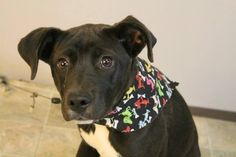 Fairy: Sweet black lab mix is out of time at high-kill upstate shelter