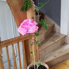 Paper pink crepe flower