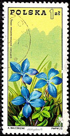 Poland.  GENTIAN & TATRA MOUNTAIN.  Scott 2090 A629, Issued 1975 Apr 30, Photo., Perf. 11, 1.00.   /ldb.