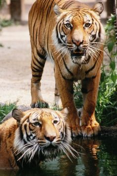 Houston Zoo - have fun learning about all the different animals while also exploring the zoo's playgrounds and waterpark. #houston #educationalactivities