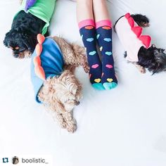 #Repost @boolistic_  Pupasaurs  @happysocksofficial in store now at @boolistic_ #love #socks #dogsofinstagram #warrnambool #fashion #style #colourful #lovesocks #brightenyourday #coloursoftherainbow #shop3280 #dogs3280 #fashion3280 #shopboolostic3280 by destinationwarrnambool