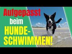 "Hundeschwimmen - Was muss beachtet werden? ""HOT SPOT"" + weitere Gefahren - YouTube Am Meer, Pets, Youtube, Cats, Pet Dogs, Vet Office, Swimming, Healthy, Animales"