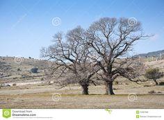 tree bare winter - Google Search