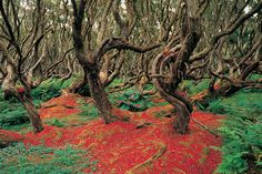 Rata Forest in New Zealand