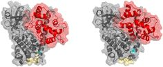 M.I. Stefan, D.P. Marshall, N. Le Novère (2012) Structural Analysis and Stochastic Modelling Suggest a Mechanism for Calmodulin Trapping by CaMKII PLoS ONE, 7(1): e29406.