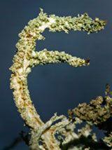 Natures Alphabet F