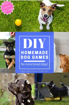 Homemade Brain Games For Dogs - Wondering how to mentally stimulate your dog? Here are fun ways to challenge dogs and keep them from getting bored! Homemade brain games for dogs + DIY dog games and activities. Games For Puppies, Brain Games For Dogs, Dog Games, Dogs And Puppies, Chihuahua Dogs, Dog Boredom, Dog Enrichment, Dog Puzzles, Diy Dog Toys