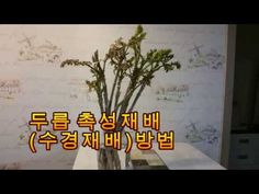 (귀농)두릅,촉성(수경)재배 방법,(두릅 대목 나눔 작은 행사) - YouTube Plants, Home Decor, Decoration Home, Room Decor, Planters, Plant, Planting, Interior Decorating
