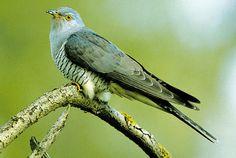 Beautiful Birds, Beautiful World, Birds In The Sky, Tier Fotos, Bird Species, Animal Photography, Animals And Pets, Parrot, Dog Cat
