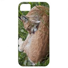 Lynx washing iPhone 5 case. Case-Mate Barely There Universal iPhone 5 Case with Lynx licking and washing itself photo. Customizable. $41.00