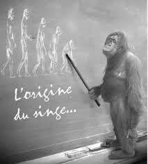 L'origine du singe bien Vu !