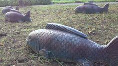 【鯉】   |baabowHutの投稿画像