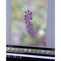 What I'm playing with today. This is SOOC. I'm excited to see how the final product /collection shapes up.  #inprogress #flowerphotography #naturephotography #lightroom #photoshop #catchastarfineart #flowers #bloom