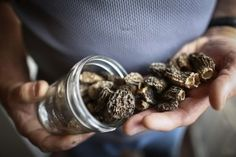 """Psychedelic mushrooms put your brain in a """"waking dream,"""" study finds - The Washington Post"""