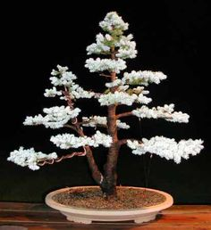 There are very many types of Christmas trees all of which are a cheaper choice compared to the artificial ones. Some of the most common types of Christmas. Bonsai Plants, Bonsai Garden, Garden Trees, Bonsai Trees, Types Of Christmas Trees, Dwarf Trees, Blue Spruce, Ornamental Plants, Plant Art