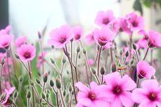 Botanic Treasure - By Caroline Gardin