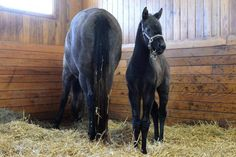 THE FACTOR x CASHING TICKETS: Homebred Cashing Tickets first foal is a beautiful filly.