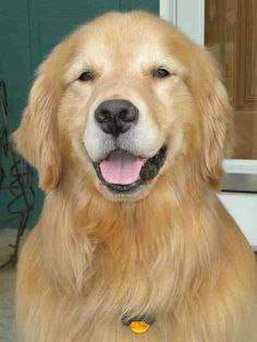 Red golden retriever puppies for sale los angeles