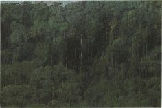 Armando Morales (Nicaraguan, 1927-2011), Tropical Rain Forest, Biological Reserve Indio Maíz, Nicaragua, 2003. Oil on canvas with beeswax, 129.9 x 194.9 cm
