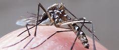 Cientistas dizem ter encontrado prova da relação entre microcefalia e vírus Zika