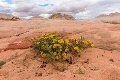 Vermillion Cliffs, AZ