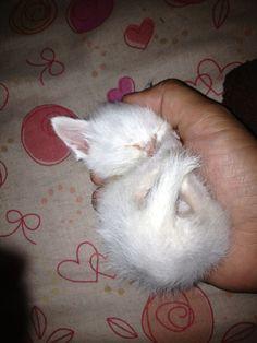 これぞ!手のひらサイズの子猫!