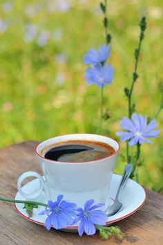 Have you tried cooking chicory? How about chicory root coffee? Chicory health benefits and warning. Learn about the chicory plant. Coffee Heart, Coffee Is Life, Coffee Love, Best Coffee, Coffee Cups, Tea And Books, Good Morning Flowers, Good Morning Coffee, Coffee Photography