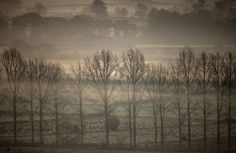 http://www.theguardian.com/books/2015/dec/12/why-we-should-celebrate-winter-woodland-not-just-the-christmas-tree