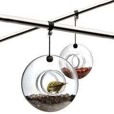 Hand Blown Glass Bird Feeder by Eva Solo - I want these for my backyard!