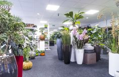 Overzicht kunstplanten en plantenbakken winkel Ede.
