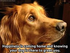 "Finish the sentence!  ""Happiness is..."" ...coming home to my best friend!  #doglovers"