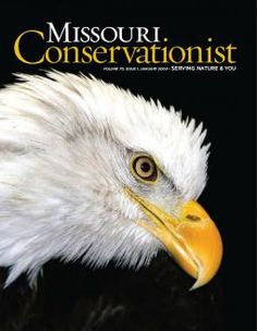 Missouri's Raptors: Eagles, hawks, falcons and vultures captivate us with their power and grace. | Missouri Conservationist