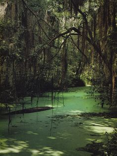 Okefenokee swamp - I'm convinced that no one knows about this place but I had a nature boy that learned of it on the history channel.  This place is mysterious and exotic and runs from Georgia into Florida.  We took a boat ride with lots of alligators around us...my little boy's dream