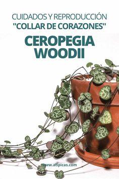 """Sedum morganianum """"burrito"""": consejos y cuidados Hanging Plants, Indoor Plants, Pallets Garden, Cactus Y Suculentas, Easy Garden, Plant Care, Outdoor Cooking, Planting Succulents, Beautiful Gardens"""